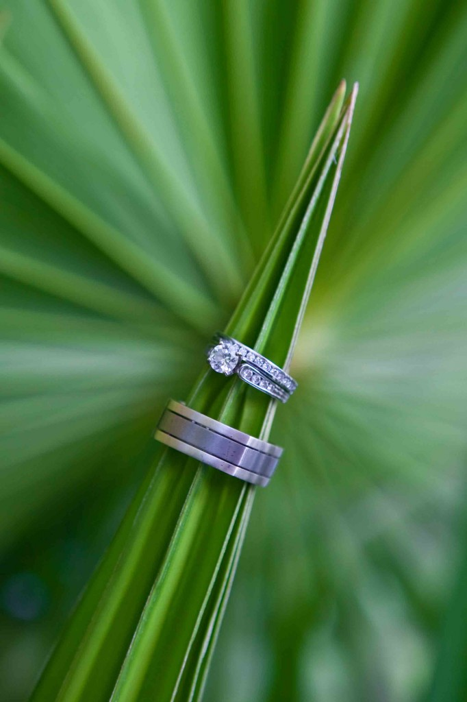 ring shot, palm frond, mexico