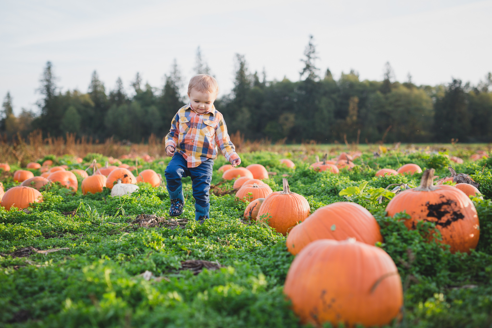 rondriso farms, family photography, pumpkin patch, cloverdale
