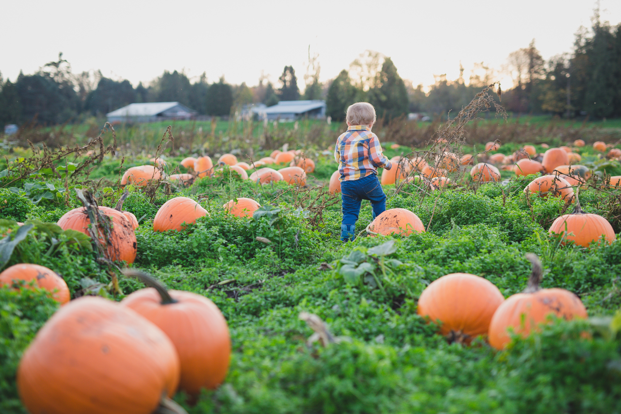 rondriso farms, pumpkin patch, wink photography, vancouver family photographer, family photographer fraser valley