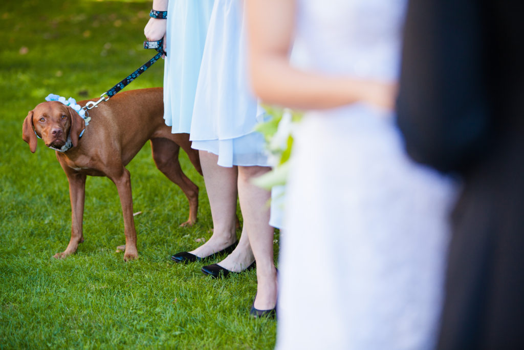 wedding dog port moody